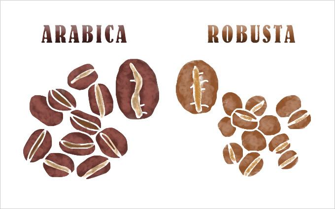 アラビカ100%ってどういう意味?コーヒー豆の品種についてのお話
