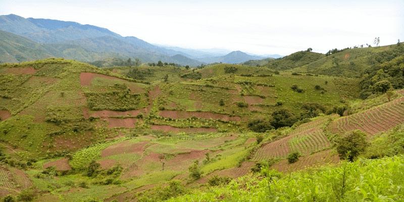 マラウイ 畑